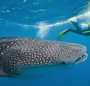 freediving-and-other-discoveries-at-the-lux*-maldives'-underwater-festival-with-world-champion,-christian-redl