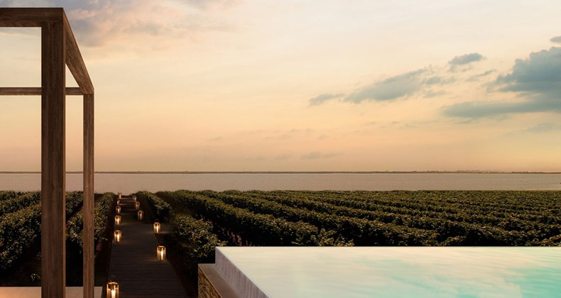 a-vineyard-by-the-sea